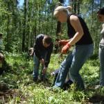 Социальная акция озеленения